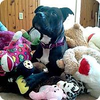 Pit Bull Terrier Dog for adoption in Hornell, New York - Princess