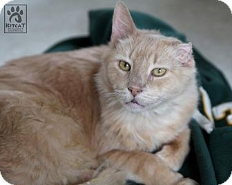 Domestic Shorthair Cat for adoption in Lancaster, Massachusetts - Bobby