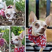 Adopt A Pet :: Caramel - Bartow, FL