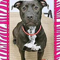 Adopt A Pet :: Jett - Scottsdale, AZ