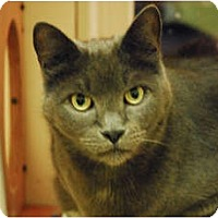 Adopt A Pet :: Meatloaf - Lunenburg, MA
