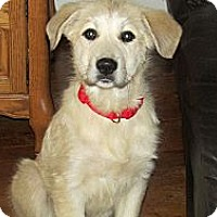 Adopt A Pet :: Maya - Wooster, OH