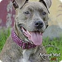 Adopt A Pet :: Gracie - Woodbridge, CT
