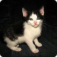 Adopt A Pet :: Mario - Norwich, NY