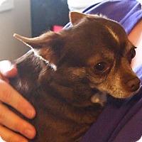 Adopt A Pet :: Elsa - Prole, IA