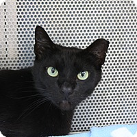 Adopt A Pet :: Bobby - Sarasota, FL