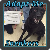 Adopt A Pet :: Sneakers - Cheney, KS