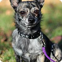 Adopt A Pet :: Pepper - Mount Laurel, NJ