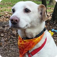 Adopt A Pet :: Georgia Peaches - Capon Bridge, WV