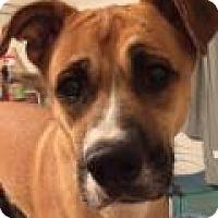 Adopt A Pet :: Bruno - Costa Mesa, CA
