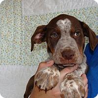 Adopt A Pet :: Tide - Oviedo, FL
