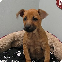 Adopt A Pet :: Suka - Groton, MA