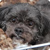 Adopt A Pet :: Pepi - Morganville, NJ