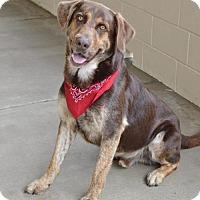 Adopt A Pet :: Butter Brickle - McKinney, TX