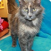 Adopt A Pet :: Ariel - Sparta, NJ