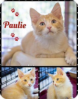 Domestic Mediumhair Kitten for adoption in Montclair, California - Paulie