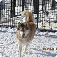 Adopt A Pet :: Husker - Walthill, NE