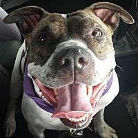 Adopt A Pet :: MABEL - Belleville, MI