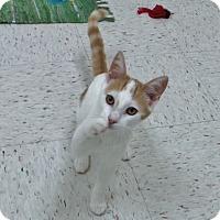 Adopt A Pet :: Chester - Chambersburg, PA
