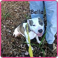 Adopt A Pet :: Tinkerbella - Matawan, NJ