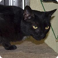 Adopt A Pet :: Umami - Wheaton, IL