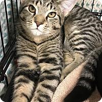Adopt A Pet :: James - Furlong, PA