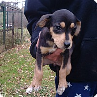 Adopt A Pet :: Susie - Kendall, NY