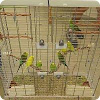 Adopt A Pet :: A106685 - Vero Beach, FL