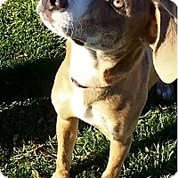 Adopt A Pet :: Buster - Warrenton, MO