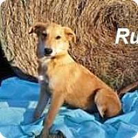 Adopt A Pet :: rufus meet me 12/2 - Manchester, CT