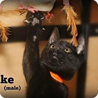 Adopt A Pet :: Jake - Glen Mills, PA