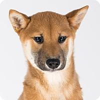 Adopt A Pet :: Cairo - St. Louis Park, MN
