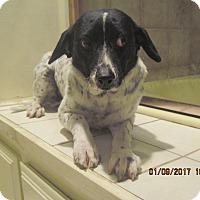 Adopt A Pet :: BELLA - La Mesa, CA
