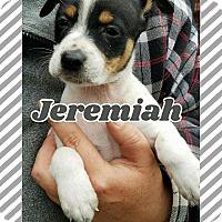 Adopt A Pet :: Jeremiah - Ringwood, NJ