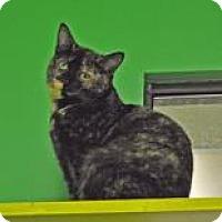 Adopt A Pet :: Nikka - Suwanee, GA