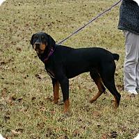 Adopt A Pet :: Cisco - Cameron, MO