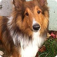 Adopt A Pet :: Buddie - Indiana, IN