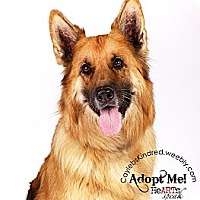 Adopt A Pet :: Nina - Loyal and Loving! - Denver, CO