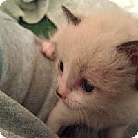 Adopt A Pet :: Ritz - Modesto, CA