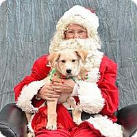Adopt A Pet :: Cruise - Saskatoon, SK