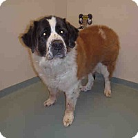 Adopt A Pet :: Perma Foster Sage - Denver, CO