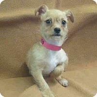 Adopt A Pet :: Lalique - Gives Puppy Kisses! - Los Angeles, CA