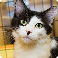 Adopt A Pet :: Spencer - Irvine, CA