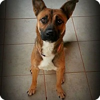 Adopt A Pet :: Bella - Alamogordo, NM