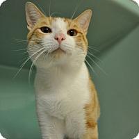 Adopt A Pet :: Flynn - Rockaway, NJ