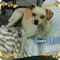 Adopt A Pet :: Summer - Lacey, WA