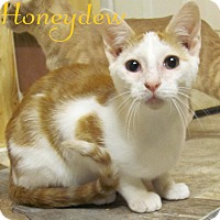 Adopt A Pet :: Honeydew - Covington, KY