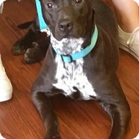 Adopt A Pet :: Lola - Snellville, GA