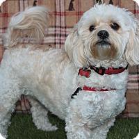 Adopt A Pet :: Marley - Inglewood, CA