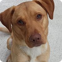 Adopt A Pet :: Peanut Butter - Kingwood, TX
